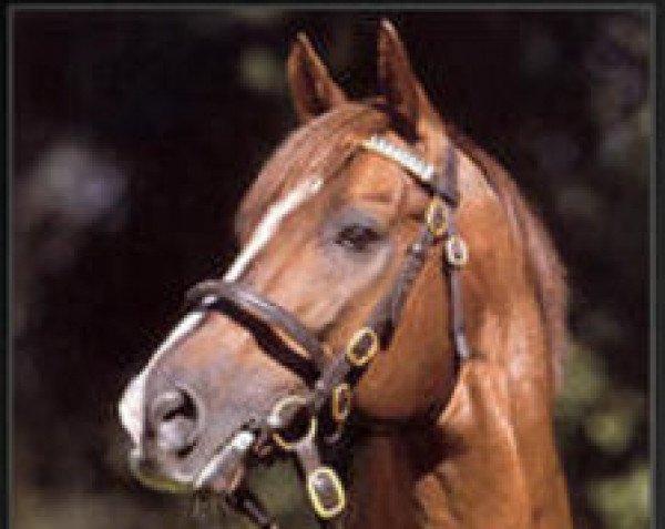 horse Lomitas xx (Thoroughbred, 1988, from Niniski xx)