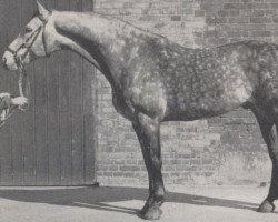 horse Moltke I (Holsteiner, 1967, from Maximus)