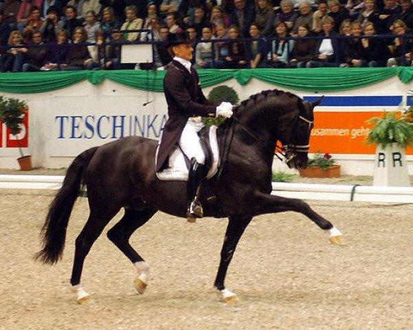 dressage horse Totilas (Royal Warmblood Studbook of the Netherlands (KWPN), 2000, from Gribaldi)