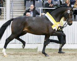 dressage horse Escamillo (Rhinelander, 2015, from Escolar)
