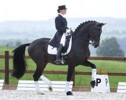 dressage horse Diamond Hit (Oldenburg, 1997, from Don Schufro)
