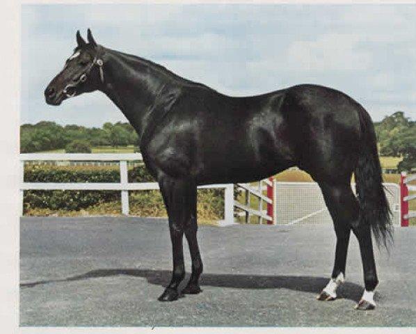 horse Hardicanute xx (Thoroughbred, 1962, from Hard Ridden xx)