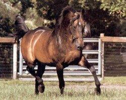 horse Galoubet A (Selle Français, 1972, from Almé Z)
