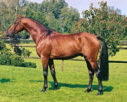jumper Cayetano L (Holsteiner, 2001, from Candillo Z)