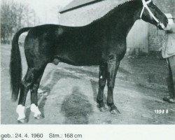 horse Fredo (Oldenburg, 1960, from Flirt)