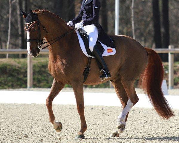 dressage horse Delgado (Westphalian, 2001, from De Niro)