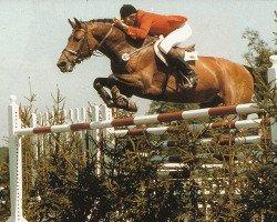 horse Caletto I (Holsteiner, 1975, from Cor de la Bryère)