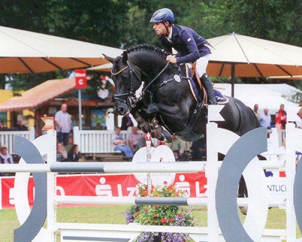 jumper Diarado (Holsteiner, 2005, from Diamant de Semilly)