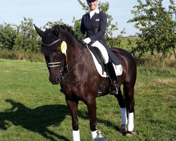 dressage horse Hija de la Luna R (Hanoverian, 2006, from Hohenstein)