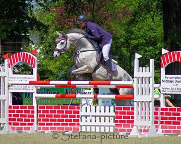 jumper Lolita 231 (German Sport Horse, 2010, from Lone Star)