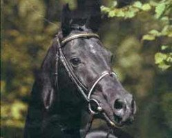 horse Lanthan (Hanoverian, 1978, from Lombard)