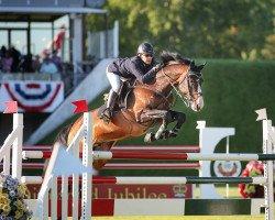 jumper Clintord I (Holsteiner, 2003, from Clinton I)