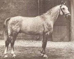 horse Gotthard (Hanoverian, 1949, from Goldfisch II)
