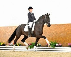 dressage horse Dragon Hill (Rhinelander, 2011, from Damon Hill 4)