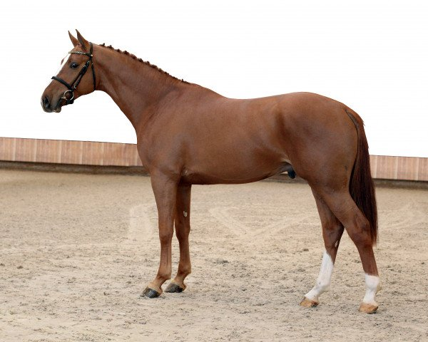 jumper VDL Iowa (Royal Warmblood Studbook of the Netherlands (KWPN), 2012, from Indoctro)