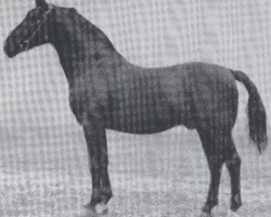 horse Falke (Holsteiner, 1926, from Favorit)