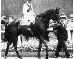 horse Cavaliere d'Arpino xx (Thoroughbred, 1926, from Havresac II xx)