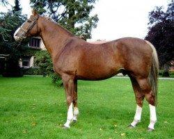 horse Elan de la Cour (Selle Français, 1992, from Vas Y Donc Longane)