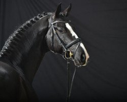 dressage horse Danciano (Hanoverian, 2010, from Dancier)