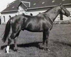 horse Plein d'Espoir IV (Selle Français, 1981, from Tanael AN)