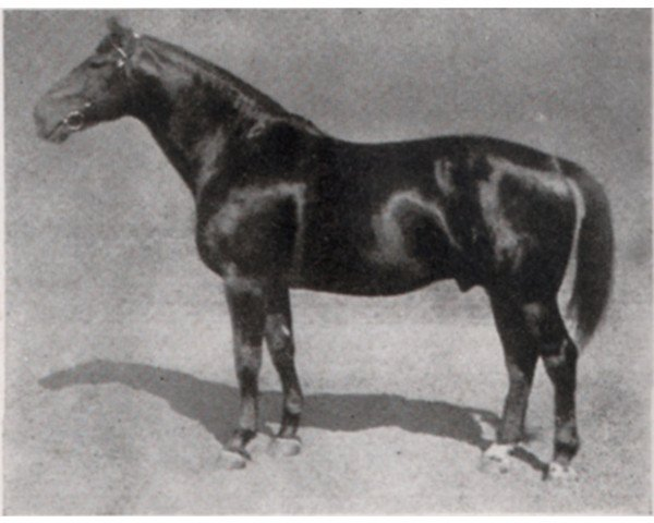 horse Floral (Hanoverian, 1925, from Flavius)