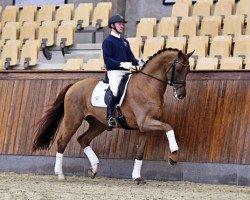 dressage horse Blue Hors Veneziano (Oldenburg, 2010, from Vivaldi)