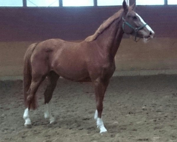 horse Bo de Landetta Z (Zangersheide riding horse, 2010, from Baloubet du Rouet)