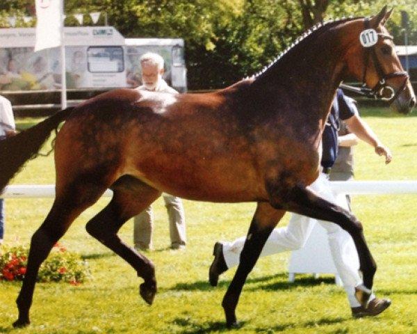 horse Contess ST (Westphalian, 2006, from Cornet Obolensky)