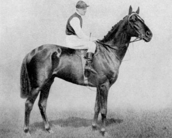 horse Clarissimus xx (Thoroughbred, 1913, from Radium xx)