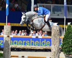 jumper Camax L (Belgian Warmblood, 2006, from Clinton)