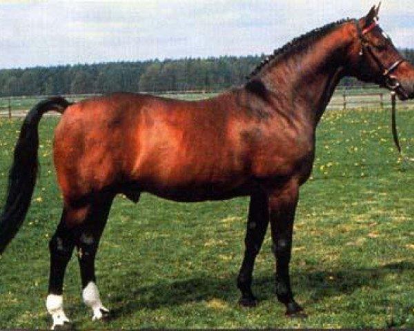 horse Raphael (Westphalian, 1979, from Ramiro Z)