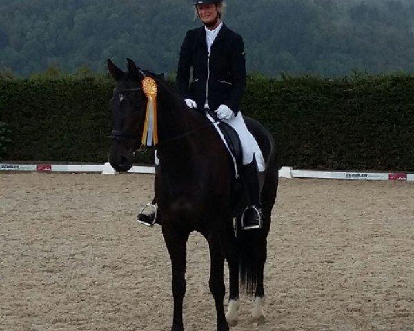 dressage horse Ducando (Hanoverian, 2004, from Dr. Doolittle 45)