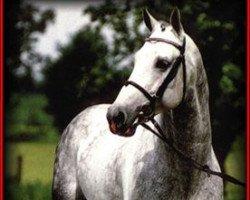 horse Latano I (Holsteiner, 1985, from Landgraf I)
