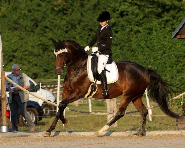 dressage horse Salinera R (Württemberger, 2010, from Sir Donnerhall I)