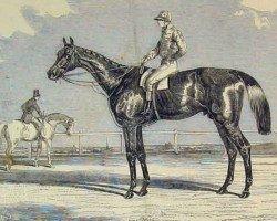 horse Kingston xx (Thoroughbred, 1849, from Venison xx)