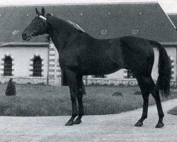 horse Fra Diavolo xx (Thoroughbred, 1938, from Black Devil xx)