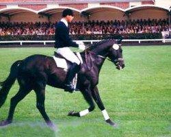 horse Natiello xx (Thoroughbred, 1989, from Sicyos xx)