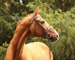 dressage horse Wolkenstein II (Hanoverian, 1990, from Weltmeyer)