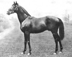 horse St. Frusquin xx (Thoroughbred, 1893, from Saint Simon xx)