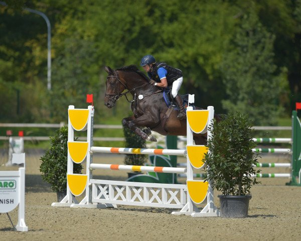 jumper Quincy 189 (Oldenburg, 2009, from Quality 9)