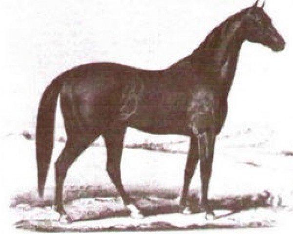 horse Eclipse xx (Thoroughbred, 1855, from Orlando xx)