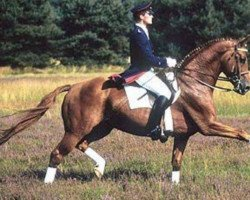dressage horse Weltmeyer (Hanoverian, 1984, from World Cup I)