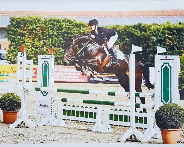 jumper Carlotta 290 (Westphalian, 2012, from Comme il faut 5)