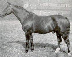 horse Halt (Hanoverian, 1916, from Honorat)