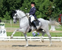 dressage horse Avagon (Sella Italiano, 2003, from Acorado II)