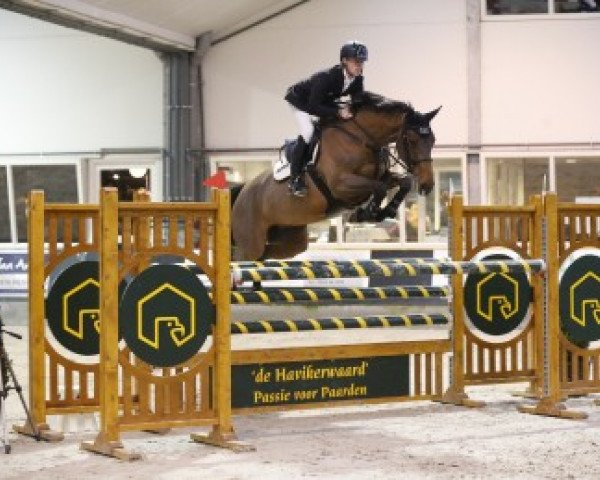 jumper Cristy (Zangersheide riding horse, 2006, from Canturo)