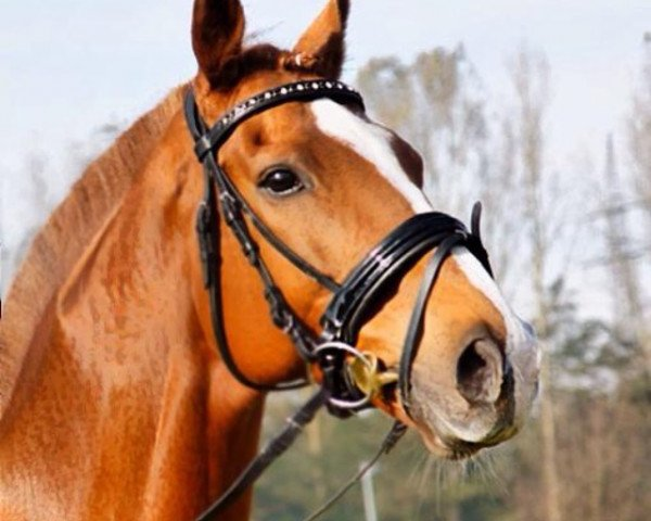 jumper Fantastic Deal xx (Thoroughbred, 2005, from Lomitas xx)
