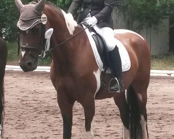 dressage horse Sembaya W (German Warmblood, 2008, from Semper)