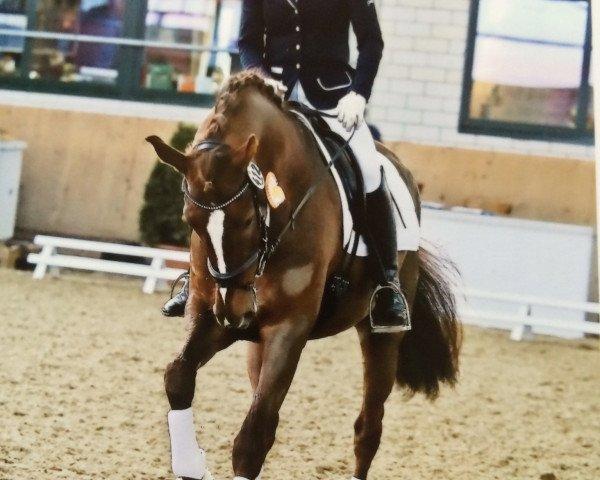 dressage horse Vio Victoria (Westphalian, 2011, from Vitalis)