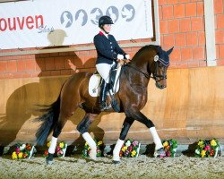 dressage horse Flashdance (Westphalian, 2011, from First Selection)